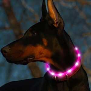 Safety Dog Led Collar